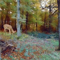 freetoedit myphoto photography woods autumn