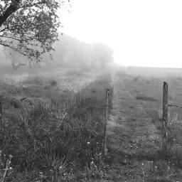 naturephotography blackandwhite foggyday weatherphotography landscape pcgloomyweather