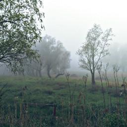 naturephotography weatherphotography foggyday landscape contestsubmission pcgloomyweather