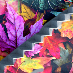freetoedit stairway leaf colorful autumn