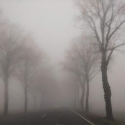 photography fog trees road autumn pcgloomyweather gloomyweather