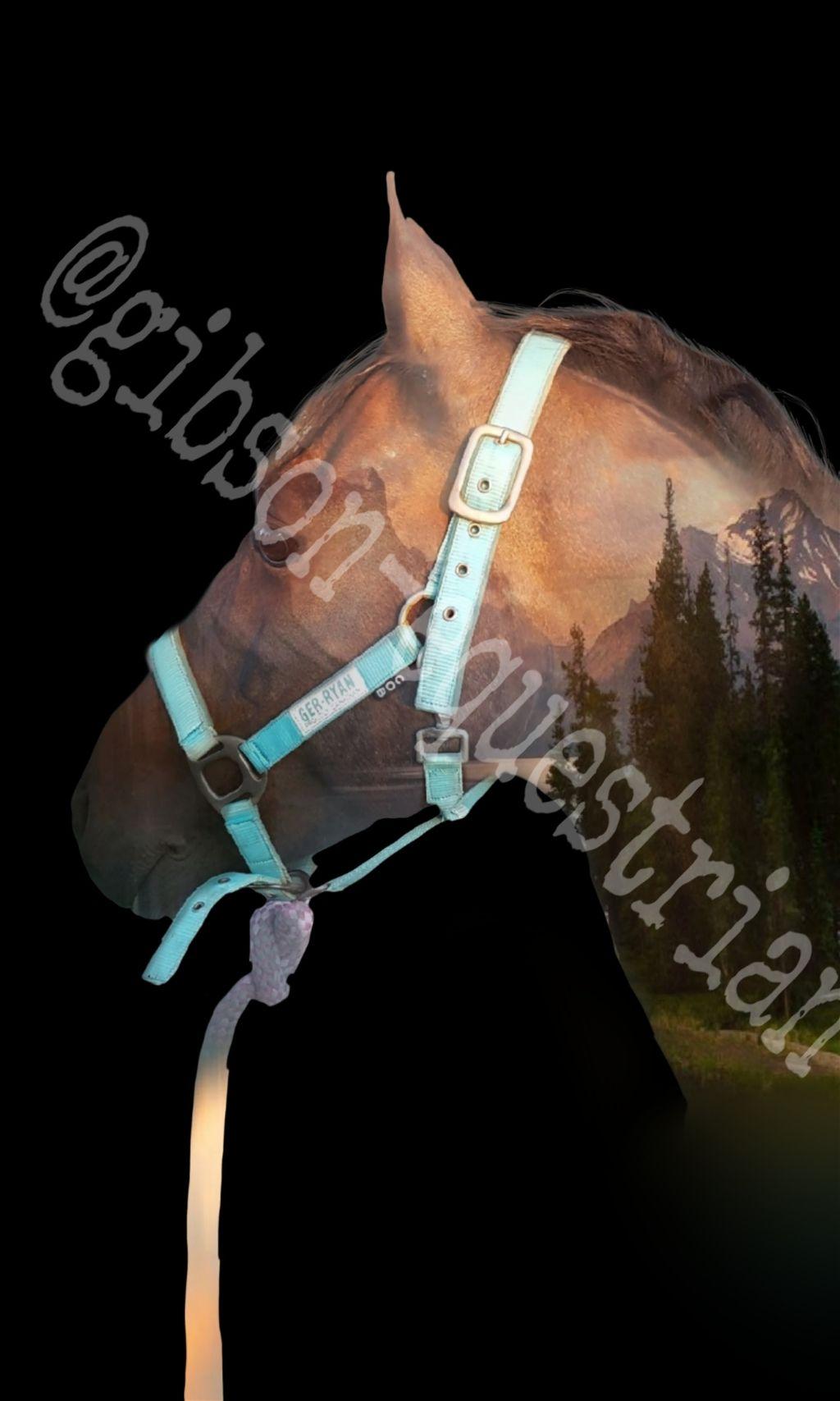 #horse #gibson #pony