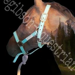 horse gibson pony