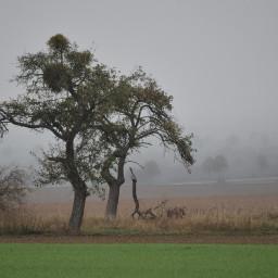 photography fog tree landscape myphoto pcgloomyweather gloomyweather