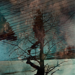 madewithpicsart abstract tree reflection