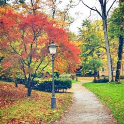 freetoedit autumn fall leaves colorful