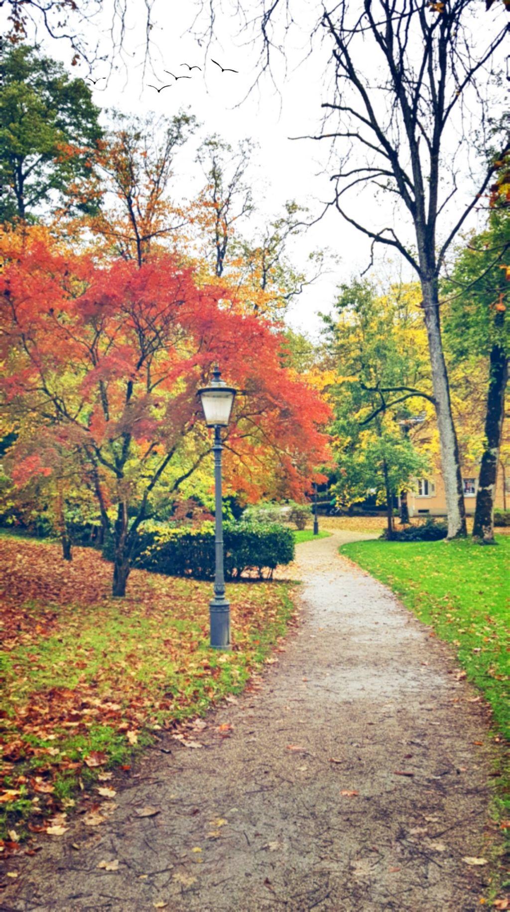 Morning walk - #freetoedit #autumn #fall #leaves #colorful #nature #outdoors #morningwalk #edit #myedit #happiness #fallcolors