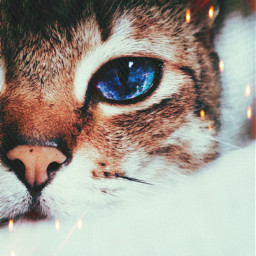 freetoedit cat kitty galaxy whiskers irccatglance catglance