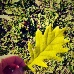 leave autumn fall leaves grass