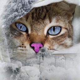 irccatglance catglance freetoedit cat november