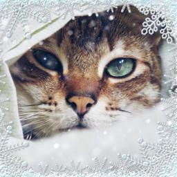 freetoedit cozy winter cold snow irccatglance catglance