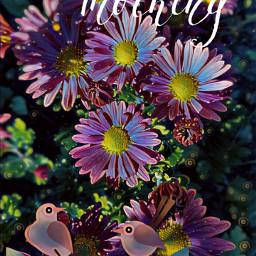 freetoedit goodmorning flowers birds magiceffect