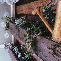photography interesting plants succulent