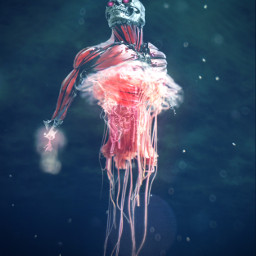 freetoedit ircredjellyfish redjellyfish