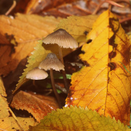 nature leaves colourful mushrooms outandabout freetoedit