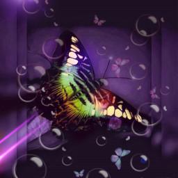 freetoedit myedit butterflies bubbles
