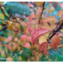 freetoedit followme leafs leaves water