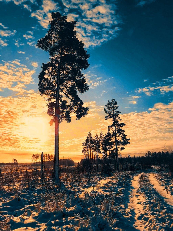 Fantastic colors - #freetoedit #colorful #colors #clouds #tree #adventure #edit #myedit #adventuretime #nature #outdoors #sky #landscape #gold #sunrise