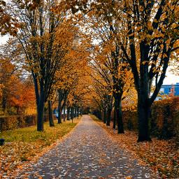 freetoedit autumm autumnvibes smartphonephotography nature