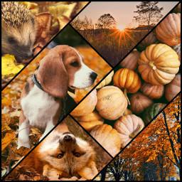 herbst fall autumn orangeaesthetic freetoedit ccautumnmoodboard