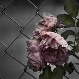 freetoedit photography blackandwhite mytoughts toughts