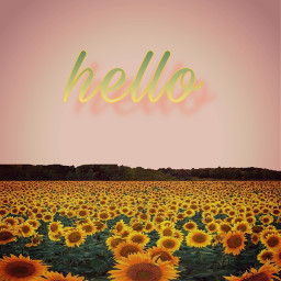 freetoedit sunflower sunflowerfield blush wallpaperforphones