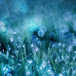 grass dew glitter photography