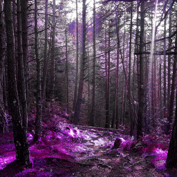 forest pink dreamy woods landscape