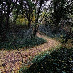 trees pathway woods dramaeffect outandabout freetoedit