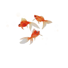 aesthetic orange fish goldfish sea freetoedit