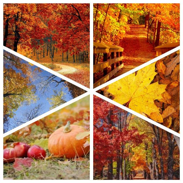 #freetoedit #autumn #november #automne