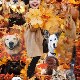 ccautumnmoodboard autumnmoodboard moodboard autumn collage