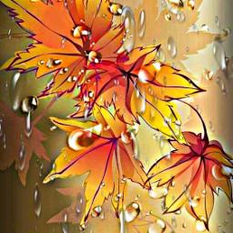 freetoedit leaves dewdrops raindrops fall