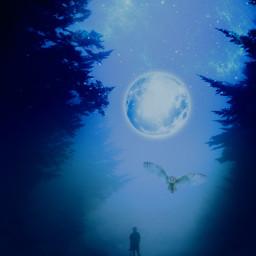 freetoedit moon owl blue sky vintageeffect adjusttools foggydays