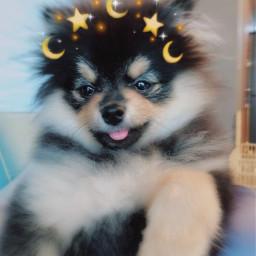 doggo yeontan idol freetoedit