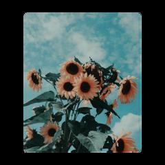 vintage flower yellowflower retro retroflower freetoedit