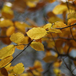 freetoedit leaves nature color branch