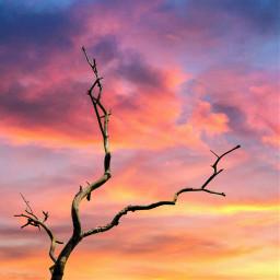 freetoedit branch sky clouds sun