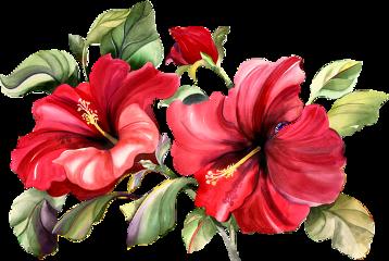 christmas flowers freetoedit