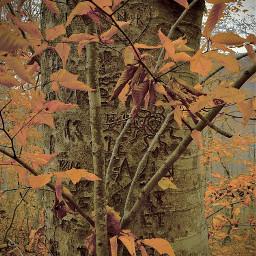 nature falltrees graffitistyle graffiti shadowhunters