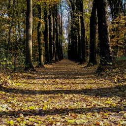 freetoedit walk walking onmyway photography