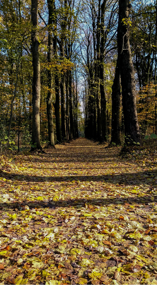 ... enjoy your time outside ...  #freetoedit #walk #walking #onmyway #photography #nature #naturephotography #colorful #allee #myclick #autumn #autumnleaves #autumnvibes #mood #moody