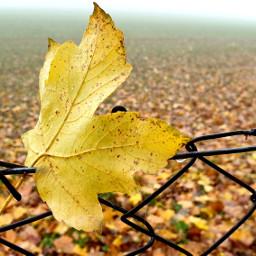 leaf dryleaf coloredleaf fence field