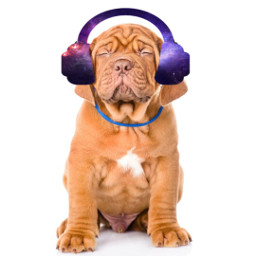 freetoedit music headphones puppy srcheadphone headphone