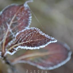 freetoedit remixit mygarden myphoto coldmorning