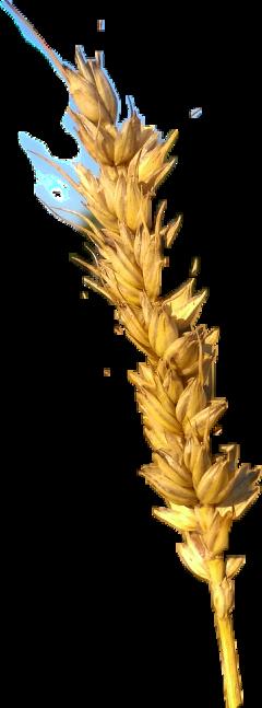 naturephotography summervibes freetoedit scgrain grain