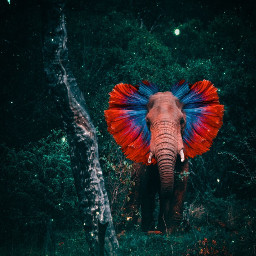 surrealism surreal surrealart animals animal