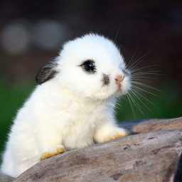 conejo rabbit cute adorable interesting
