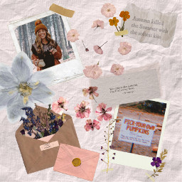 pumpkins driedflowers envelope moodboard autumn scrapbook freetoedit ccautumnmoodboard autumnmoodboard collage