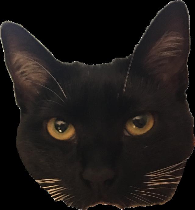 #cat #freetoedit